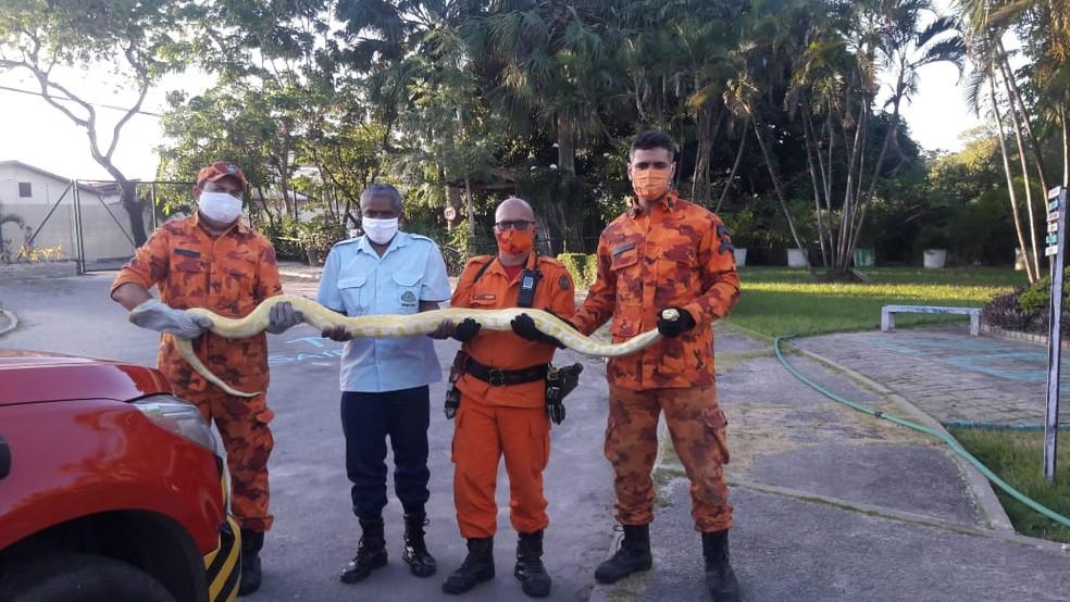 Agentes da 2ª Companhia do Batalhão de Busca e Salvamento (BBS) resgataram a cobra píton do telhado de uma casa no Jangurussu, em Fortaleza. — Foto: Corpo de Bombeiros/ Divulgação