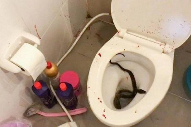 A cobra foi resgatada por especialistas e solta em uma mata. (Foto: Reprodução )