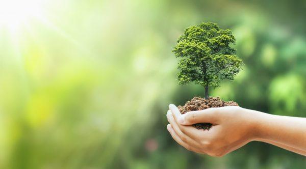 Foto: lovelyday12 / Shutterstock.com