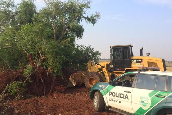 As autuações foram realizadas pela Polícia Militar Ambiental no último sábado (19) na zona rural de Iporã(Foto:PMPR)