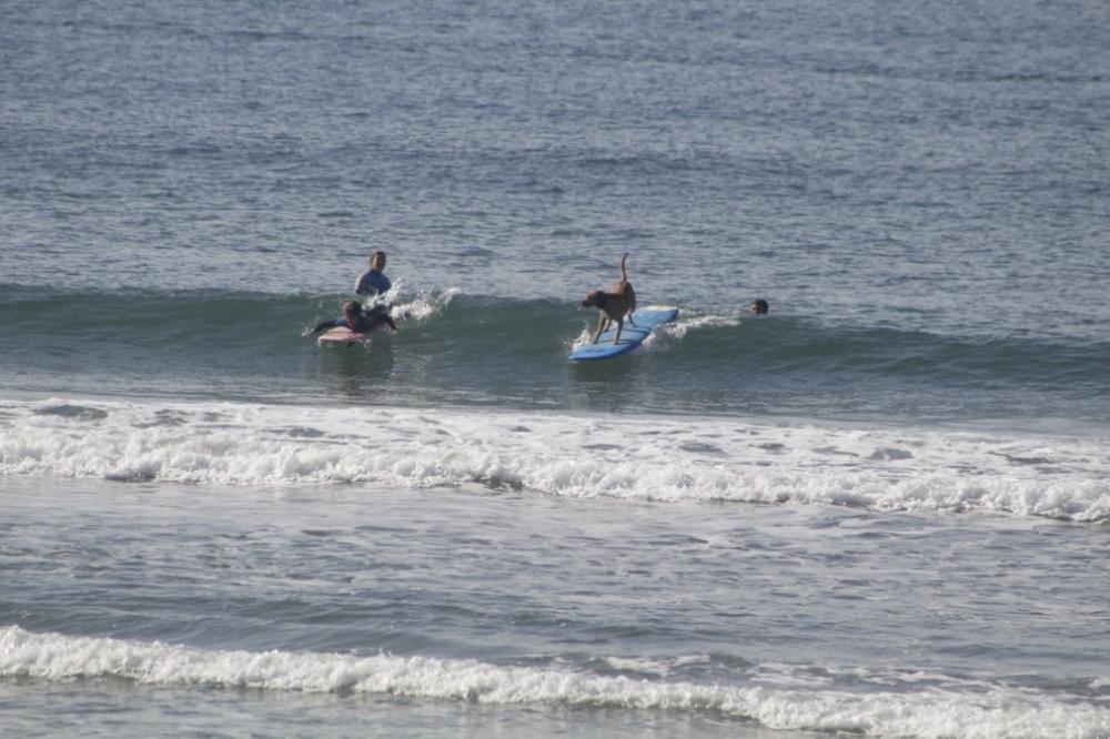 Swell surfando nas ondas de Matinhos — Foto: Juca de Barros/Arquivo pessoal